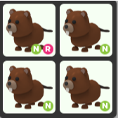 Bundle   4 Neon-Beaver