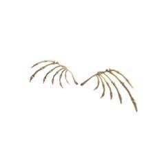 Accessories | x1 Skeletal Wings