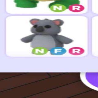 Pet   Nfr Koala
