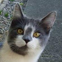Arlo the Cross-eyed Cat
