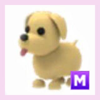 Pet   M Dog