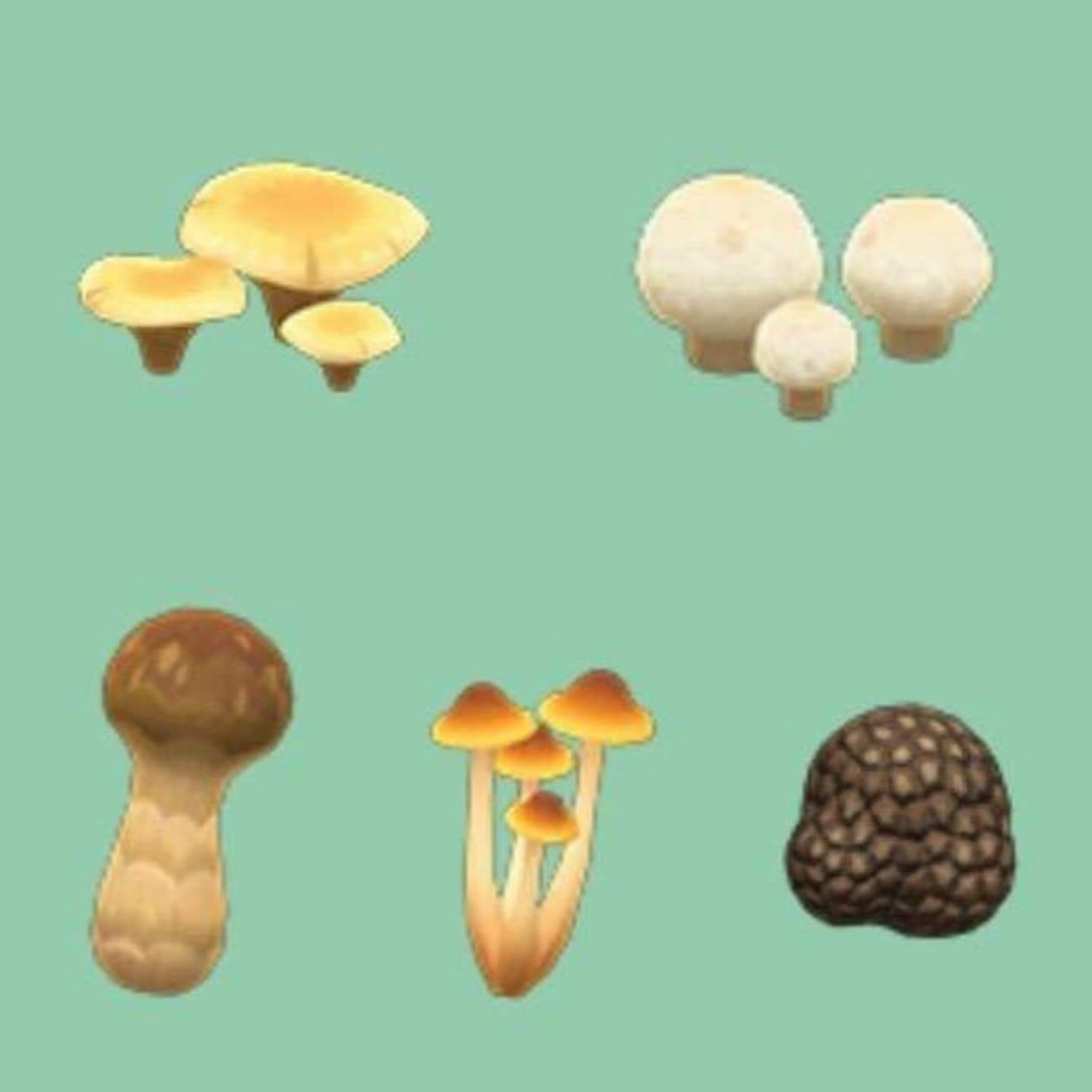 Resource | Mushrooms ALL TYPES 250x