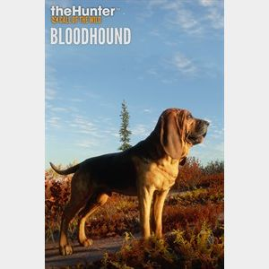 theHunter: Call of the Wild™ - Bloodhound