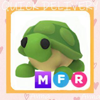 Limited | MFR Turtle