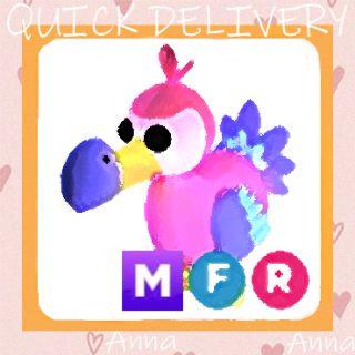 Limited | MFR Dodo