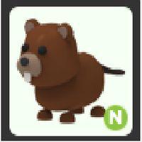 Pet | Neon Beaver