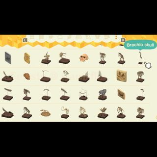 Bundle   73 Museum Fossils
