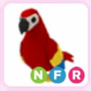 Pet | NFR PARROT