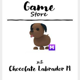 Pet   Chocolate Labrador M