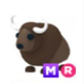 Pet   Buffalo MR