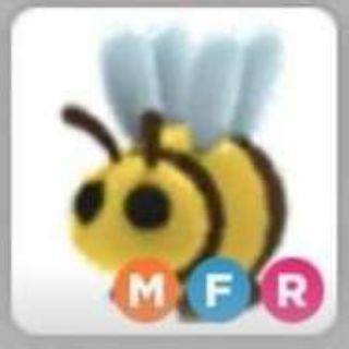 Pet | MFR BEE