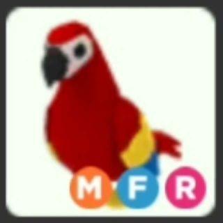 Pet | MFR Parrot