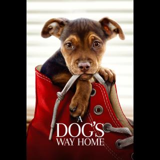 A Dog's Way Home (2019) | Vudu