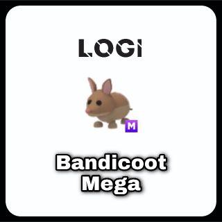 Pet   Bandicoot M