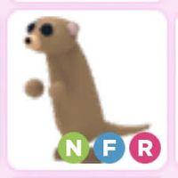 Pet   NFR MEERKAT REBORN